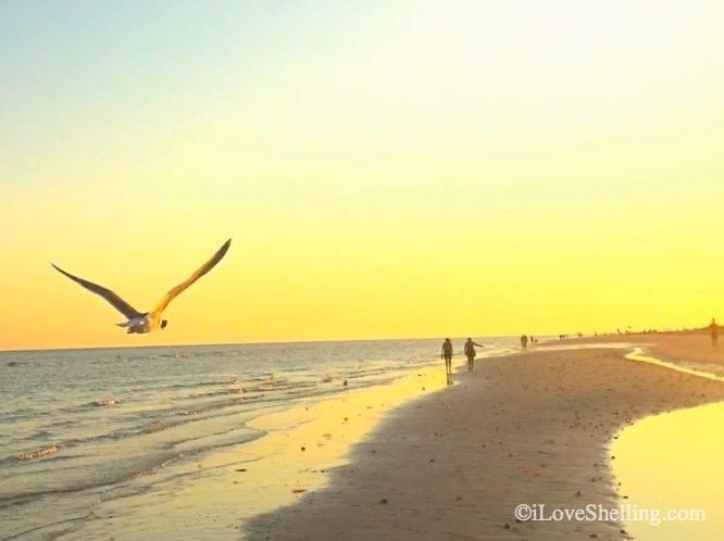 Beautiful Life On The Beach Video