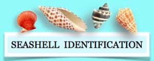 seashell identification - identify shells
