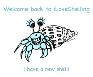iLoveShelling aqua hermit junonia shell c