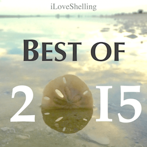 2015 Best Of iLoveShelling