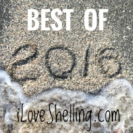 best of 2016 beachcombing