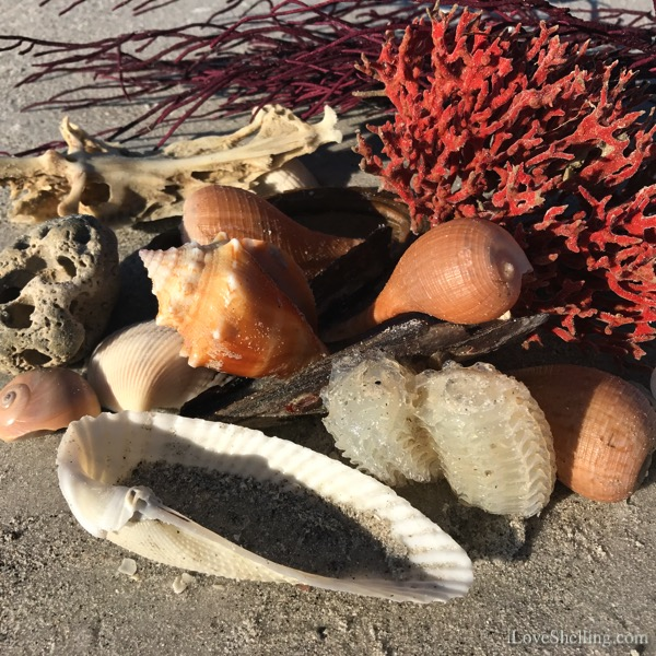 I Sea Stars, Weeds, Urchins and Shells