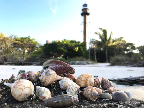 seashells at sanibel lighthouse