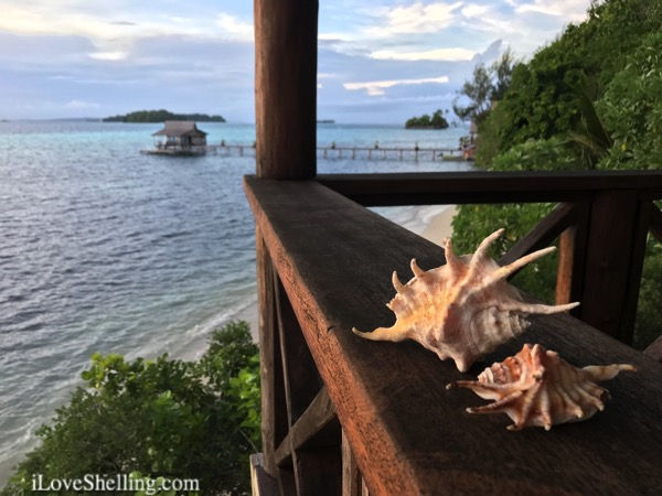 Solomon Islands resort FatBoys seashells on the porch