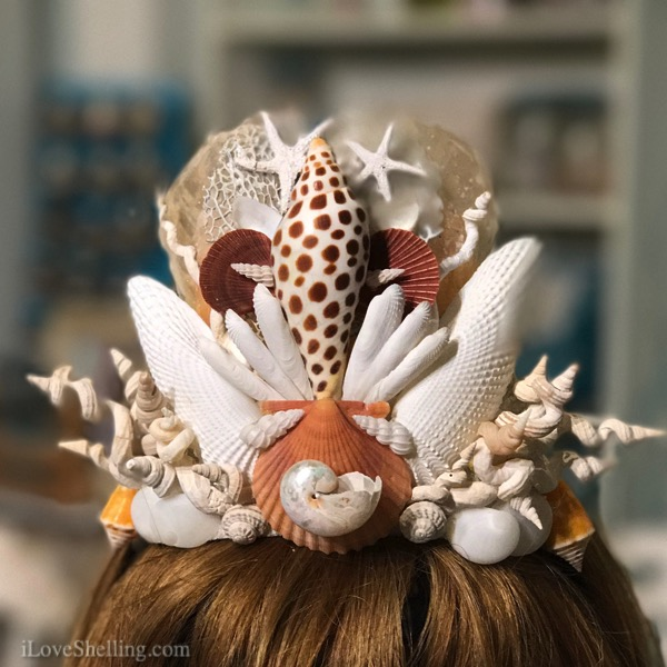 Shelleopatra Queen Nautilus For Shell Museum