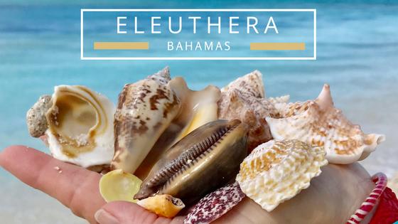 Eleuthera Bahamas seashells beach combing