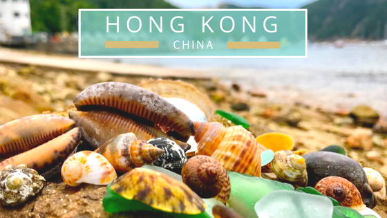 Hong Kong seashells beach combing