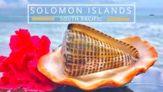 Finding seashells in Solomon Islands Indo Pacific