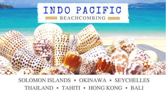 Indo Pacific beachcombing and shelling travel destinations