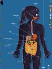 [Gratuit Temporairement] Expliquez le corps humain à vos enfants avec l'application The Human Body sur iPad - Test et avis 6