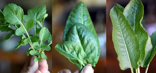 insalata verde mista