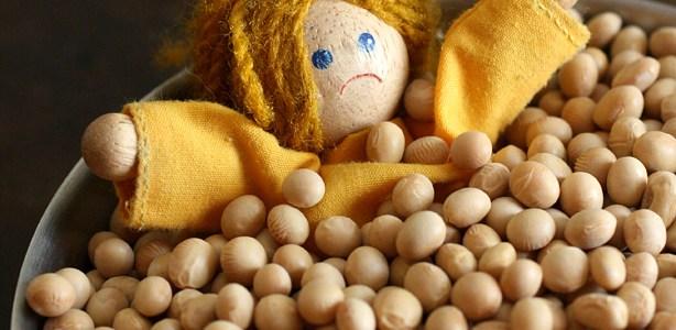 La soia, un legume sui generis (terza parte)