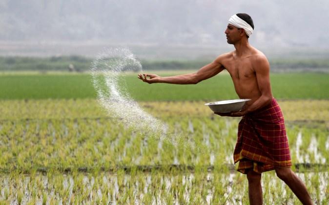 Risultati immagini per contadini indiani delle risaie