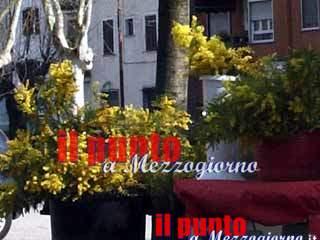 Controlli alla mimosa a Cassino, Finanza e Polizia individuano 8 venditori abusivi