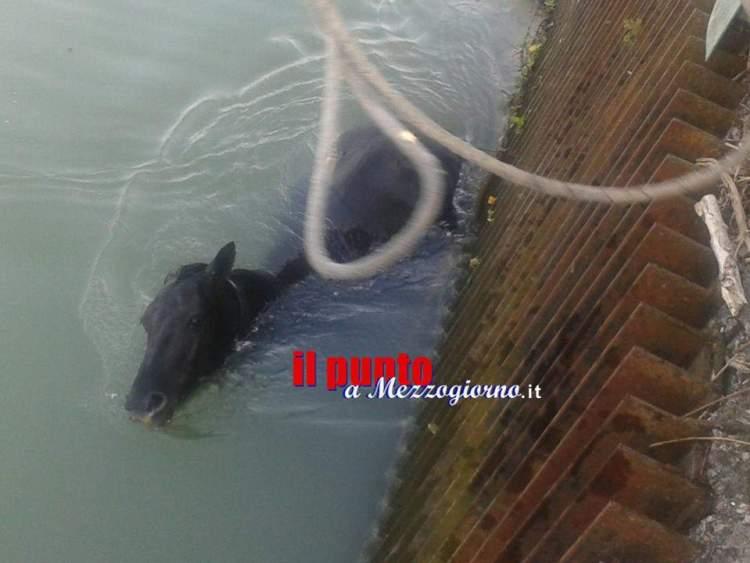 cavallo in acqua3