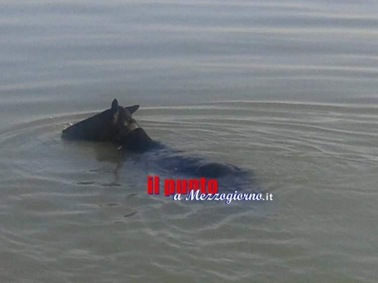 cavallo in acqua5
