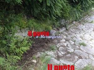 cinghiali-via-latina-02