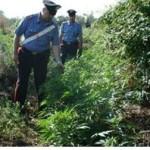 marijuana sequestro