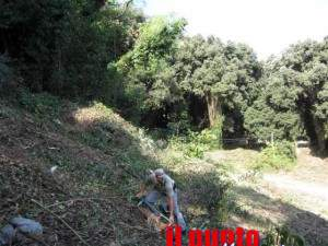 forestale-bosco-01