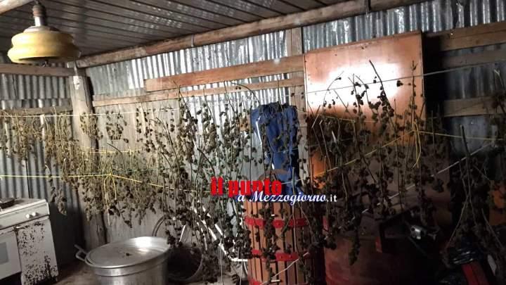 Scoperto con oltre 2 chili di piante di marijuana messe ad essiccare, 19enne arrestato a Pietramelara