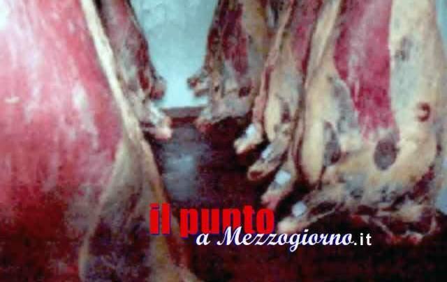L'indagine sulla macellazione clandestina da Avezzano ad Isola Liri