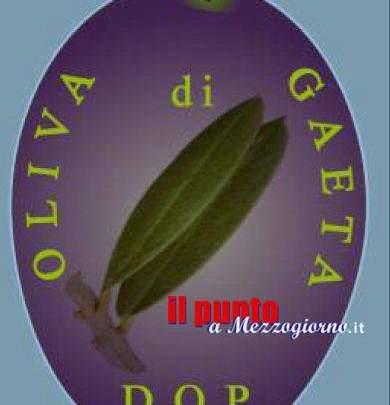 Passi avanti sul percorso del Dop per l'oliva di Gaeta