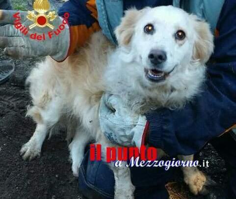 Cagnolina salvata dai vigili del fuoco a Cisterna. Era finita in un tubo di scolo delle acque piovane