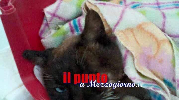 Brindisi – Sparano ad un gatto e poi lo picchiano, Opia e Aidaa lo salvano e cercano il responsabile