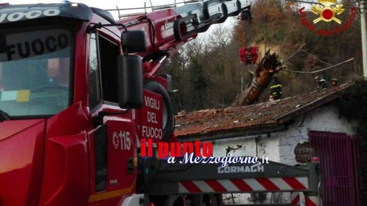 Grosso albero si abbatte su casa a Pico