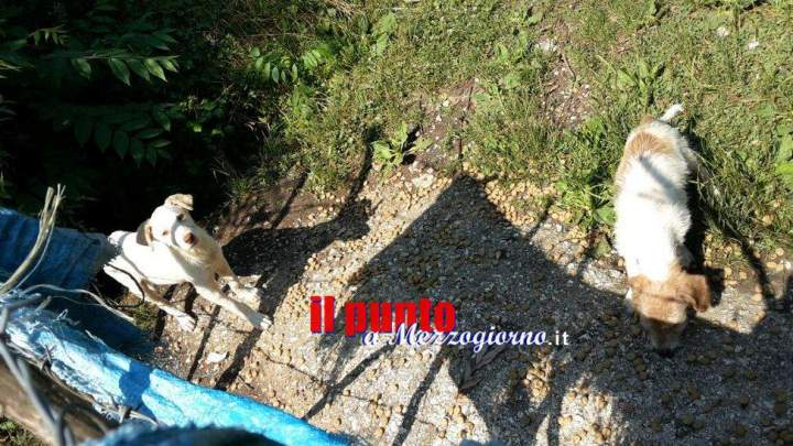 Animalisti sul piede di guerra a Cassino, raccolta firme per chiedere alla Asl un ambulatorio veterinario
