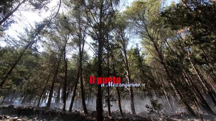 Ciociaria in fiamme, brucia anche la Selva di Paliano
