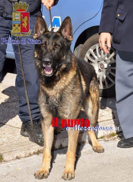 Controlli antidroga a Ceccano e Fiuggi. All' esterno di un pub fiutato dal cane poliziotto un involucro di cocaina