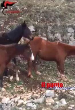 Moto contro cavallo a Guarcino, centauro ferito e allevatore denunciato