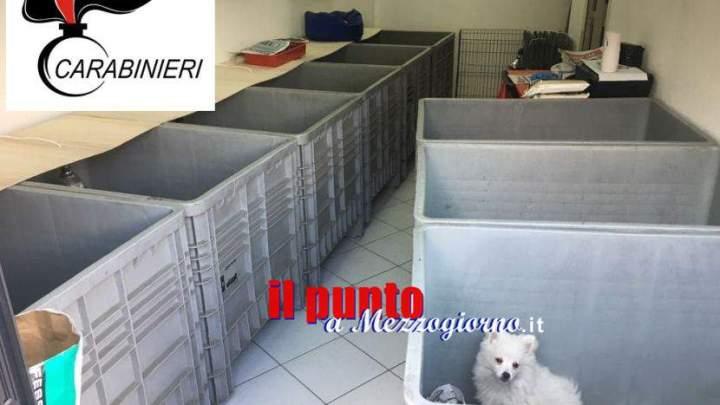 Traffico illegale di animali a Frosinone, sequestrati 16 cuccioli