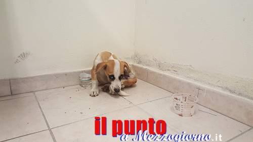 Caccia al cagnolino sull'A1 ad Anagni, salvato da morte certa e sventato il rischio incidenti