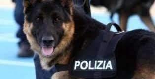 """Cassino – Polizia di Stato: è """"guerra"""" continua allo spaccio, altro arresto"""