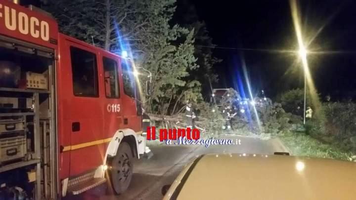 Un pino cade sulla Casilina tra Cervaro e S.Vittore. Strada appena riaperta