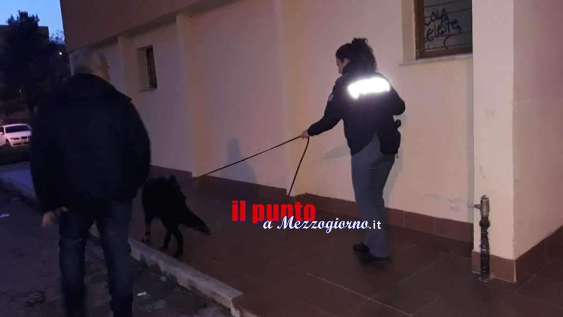 Controlli antidroga nelle scuole di Cassino, denunciato un minorenne