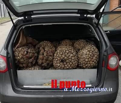 Bloccato, in A1 dalla Polstrada di Cassino, con 350kg di molluschi privi di traccabilità