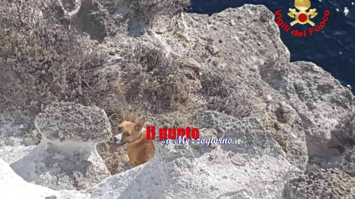 Luna prigioniera a Ponza, Pitbull salvata dai pompieri