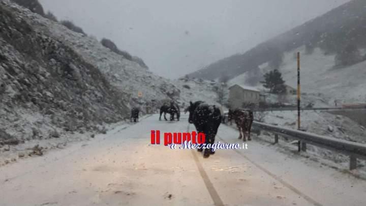 Neve in Ciociaria, mezzi spazzaneve e spargisale sulle strade di montagna – Foto e Video