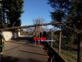 maltempo alberi1