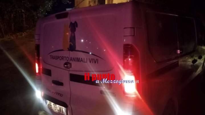 Aggrediti dal proprio pitbull a Lanuvio, padre e figlio in ospedale