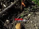 San Vittore del Lazio, scavi in un cantiere riportano alla luce ordigni bellici della II Guerra Mondiale