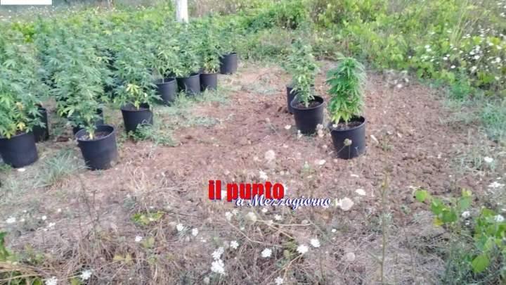 Coltivava marijuana a Sora e la essiccava ad Alatri, arrestata 29enne