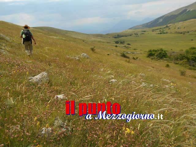 Scoperta nel mondo della botanica, l'Abruzzo e la Steppa Asiatica uniti dalla Festuca del Vallese