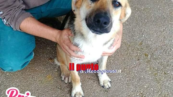 Abbandono cani a Velletri, l'emergenza continua e canile è troppo pieno