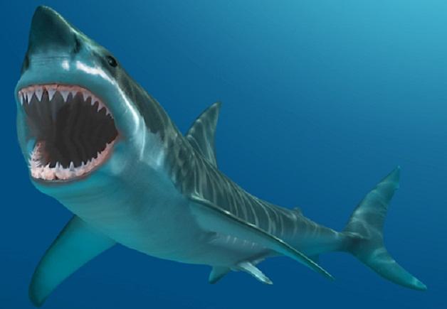 Campagna animalista di Aidaa: se avete emorroidi non uccidete squali per curarvi