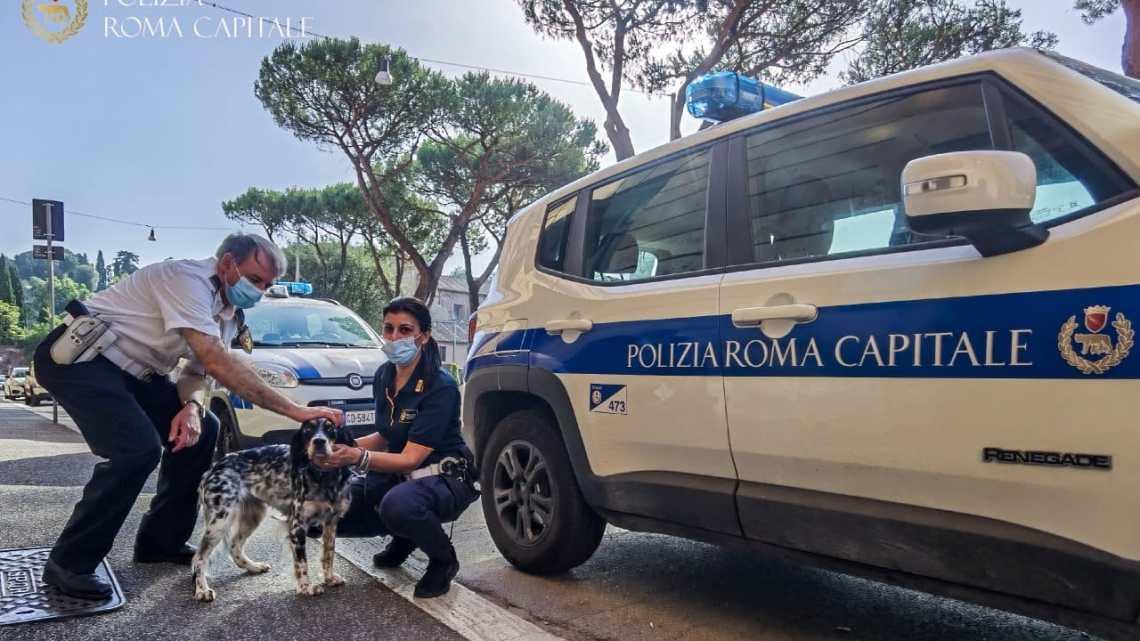Vagava spaventata sul lungotevere, cagnolina salvata da una pattuglia della Polizia Locale a Roma