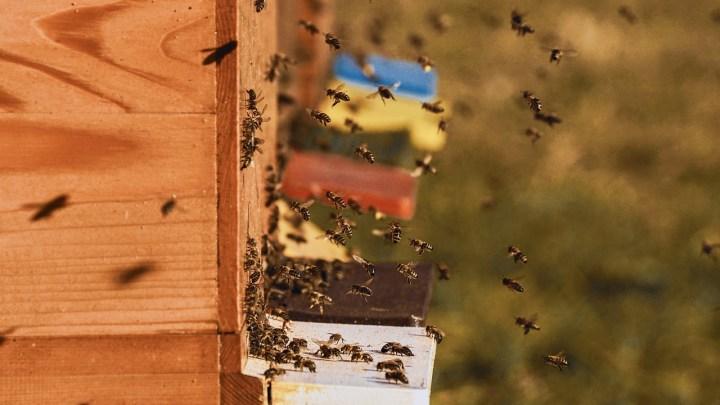 Confagricoltura Frosinone, i cambiamenti climatici stanno mettendo in ginocchio l'apicoltura locale